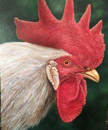Animals by Rebecca