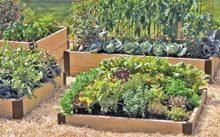 farm-Raised-Beds