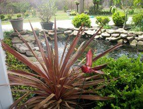 garden-koi-pond