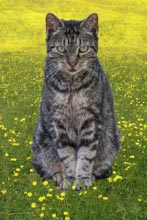 cats-Milagros-in-the-grass
