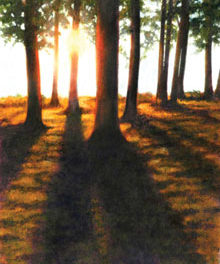 Sunlight & Shadow