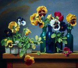 garden-Grow-pansies-in-winter