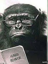 Monkey-vision
