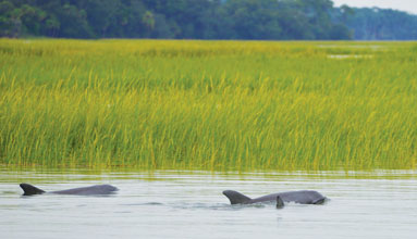 fall-Dolphins-in-the-Marsh