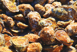 fall-Oysters