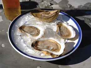 Oysters-on-a-Plate