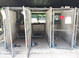 Animal Shelter Cages