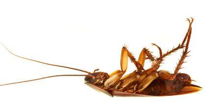 debugging Cockroach