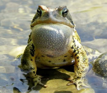 The Toadster Goes to Washington . . . and Survives