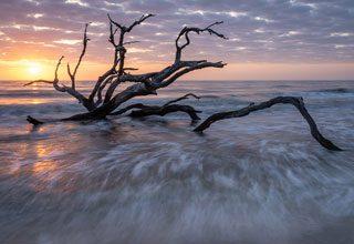 BAA Advanced Sunrise Driftwood Beach Bill Bogle