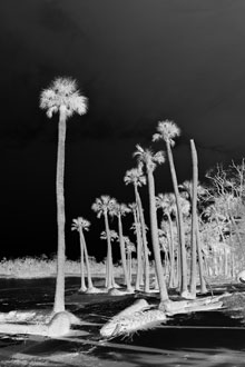 jayne night palms