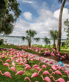 Pledge The Pink Seeks Professional (Volunteer) Photographers