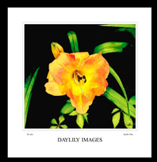 digital art daylily