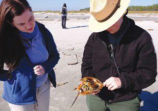 St Phillips Naturalist Megan Explains Biology of Horseshoe Crabs