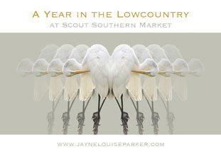 Jayne Parker at Scout