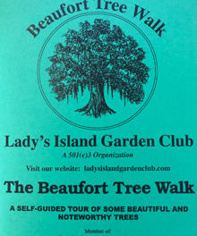 Take a Walk Through the Trees