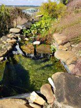 garden Susan Tom Harden 2