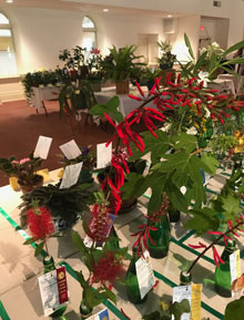 Lowcountry Living Horticulture Specialty Show