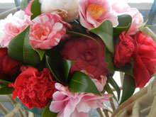 garden camellias SecondPartOfArticle