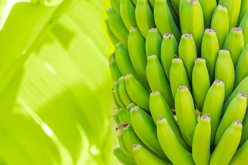 Green Bananas – A Story by Jack Sparacino