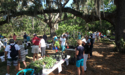 Native Plant Sale at Coastal Discovery Museum
