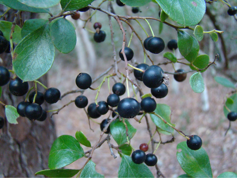 Native Plants – Better for a Reason