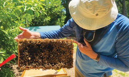 Getting Into Beekeeping